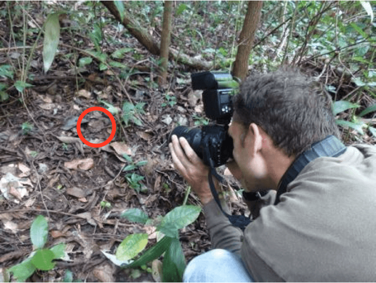 Rowland Griffin: Photographing barba amarilla - Bothrops asper