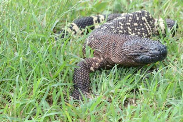 The Motagua Valley. An Inspiring Place to Visit in Guatemala. A Must for Reptile Fans