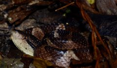 Night hiking with mossy frogs and salamanders