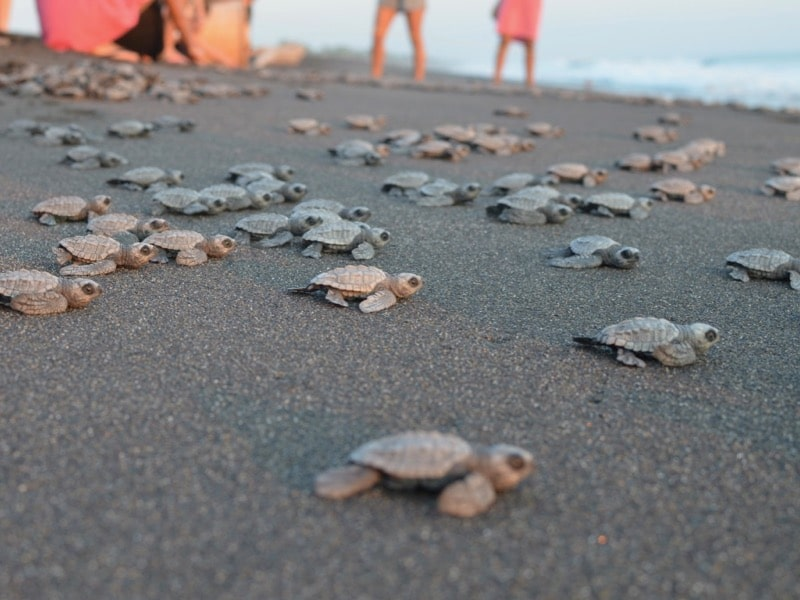 Discover sunsets and sea turtles on the Pacific Coast