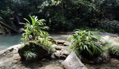 Immerse yourself in Caribbean rainforest