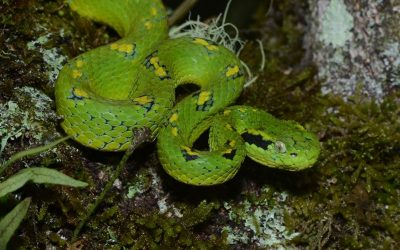 Snake Declines Linked to Frog Fungus