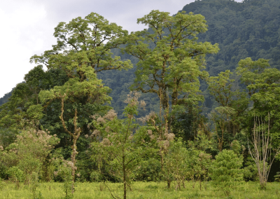 cloud forests of Guatemala