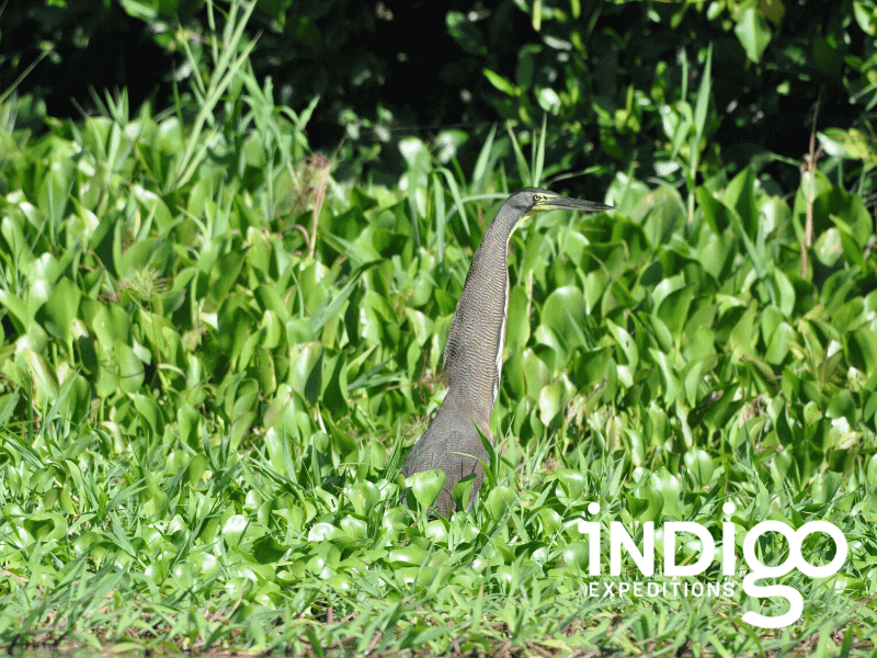 Wildlife encounters in the coastal wetlands of the Pacific Coast of Guatemala.
