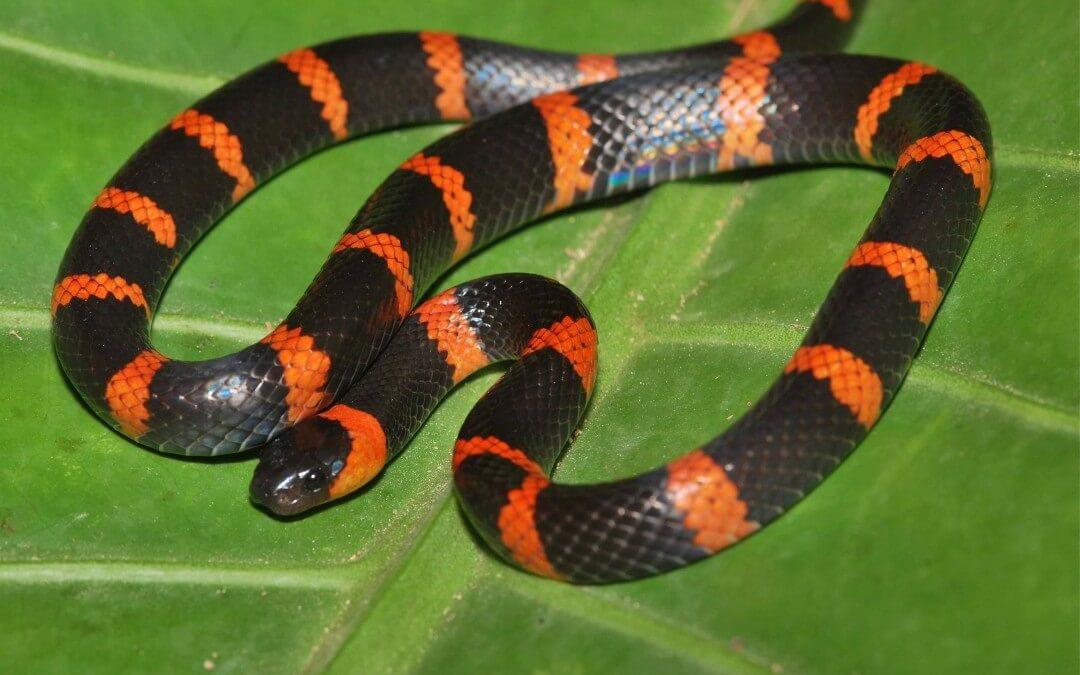Surprising serpents show up!