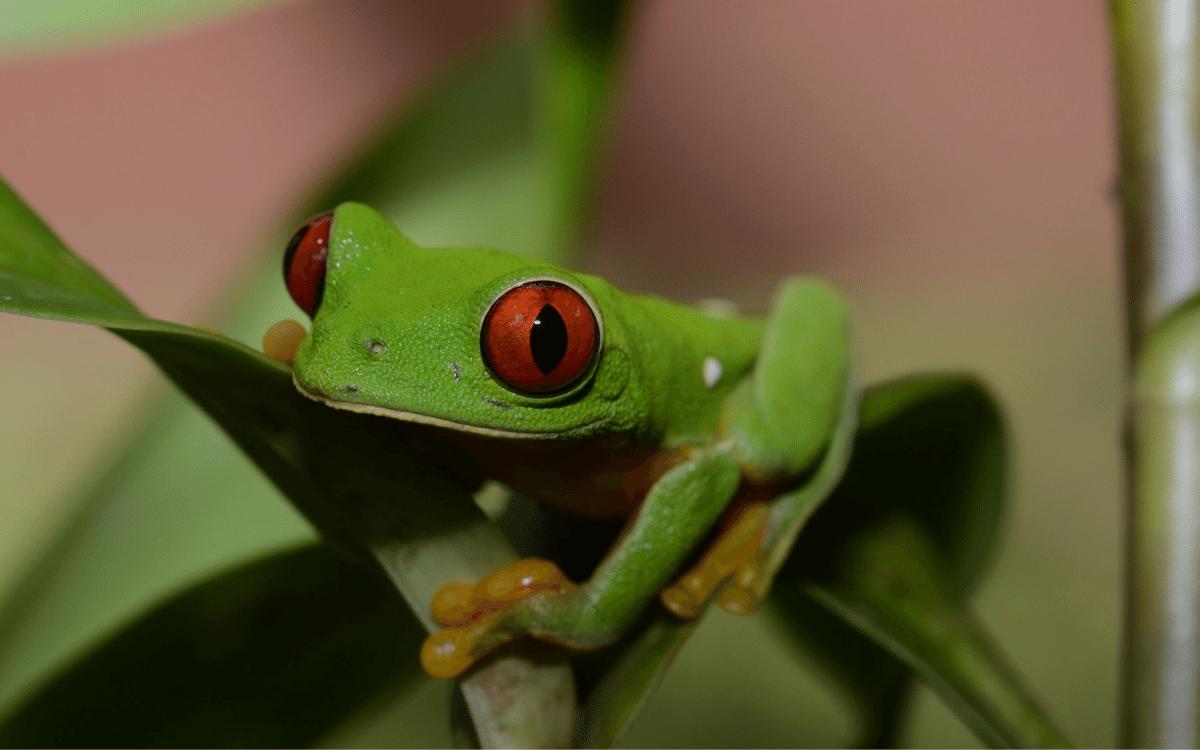 Reptile and Amphibian Diversity in Guatemala