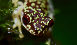 Reptile and Amphibian Diversity in Guatemala